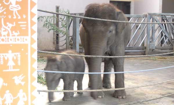 Elefanter-Budapest-Zoo